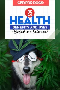 The 25 Health Benefits and Uses of CBD for Dogs