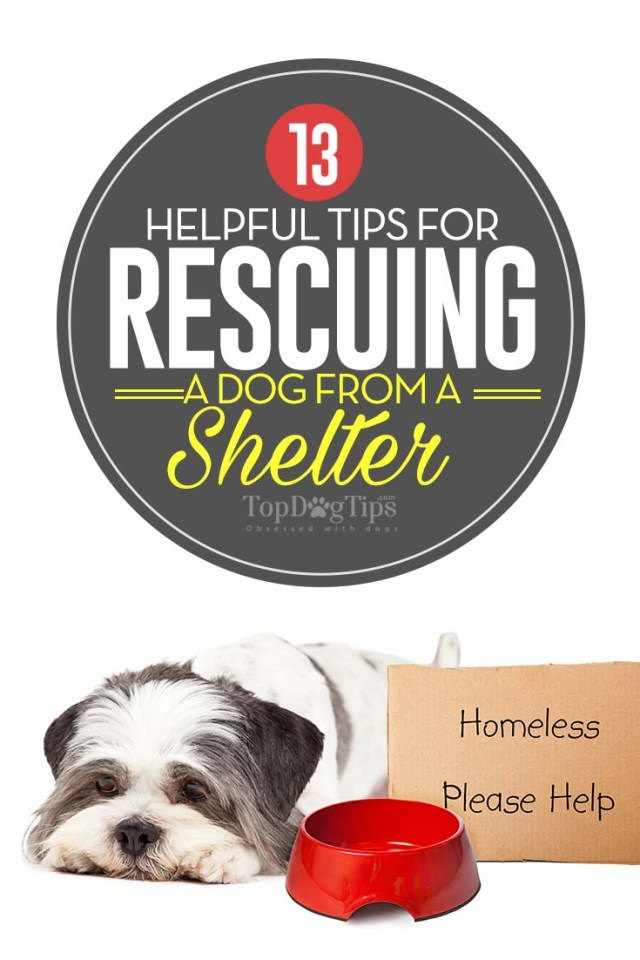 Top 13 Helpful Tips for Rescuing a Dog from a Shelter