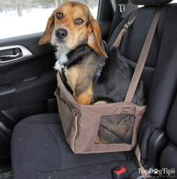 How my beagle Molly fits into this seat.
