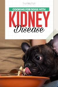 Dog Kidney Disease Diet 101 - Evidence-based Guidelines on Feeding
