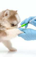 Dog vaccine for kennel cough