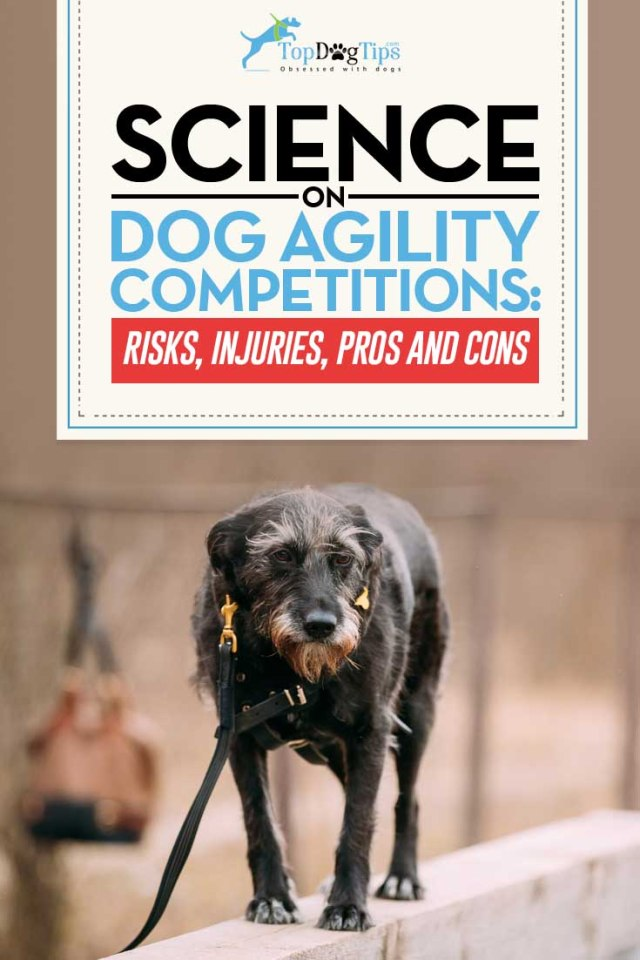 Guide on Dog Agility Competition