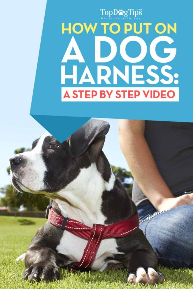 Guide on How To Put On A Dog Harness