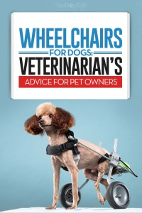 How to Choose the Best Wheelchairs for Dogs - Vet's Guide