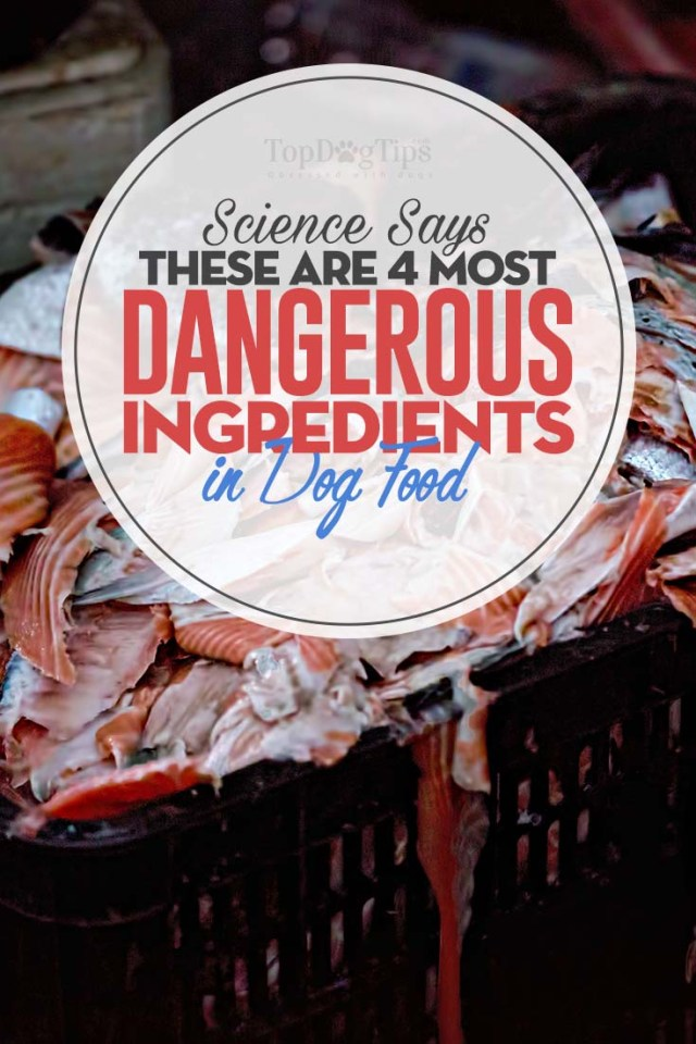 Most Dangerous Ingredients in Dog Foods (Backed by Science)
