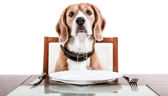 What to Feed Dog With Upset Stomach