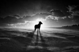 What to do past dog euthanasia