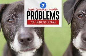 7 Most Common Health Problems of Senior Dogs