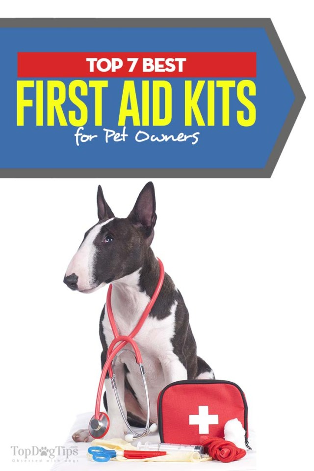 7 Top Rated Best Dog First Aid Kit Choices
