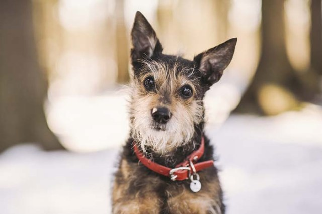 Best Calm Small Dogs That Are Mild Tempered
