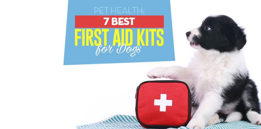 Best Dog First Aid Kit Options