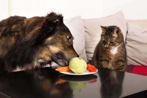 Cat and dog eating food together