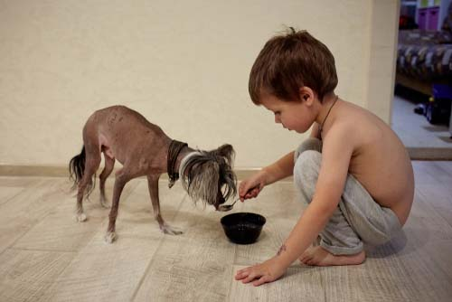 Chinese Crested for Kids