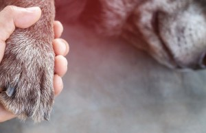 Dog Cremation Cost Breakdown and Step by Step Guide