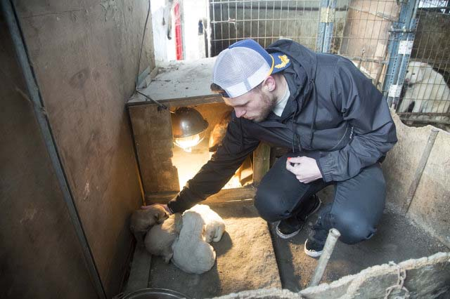 Gus saves 90 dogs from meat farm in South Korea