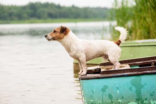 Have an Boat Dog Emergency Plan