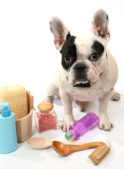 How parabens in beauty products are killing our dogs