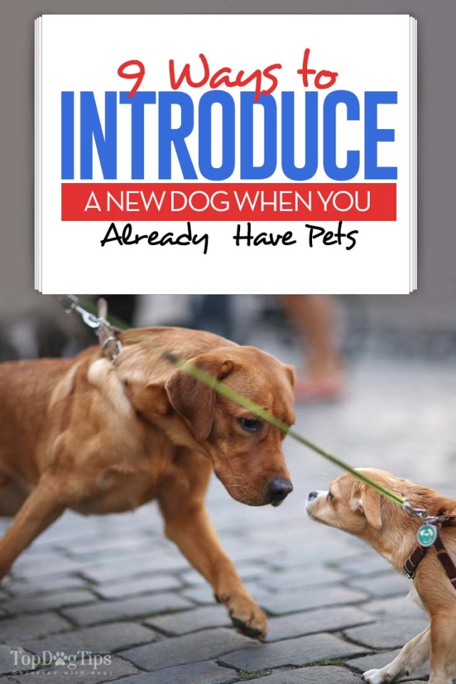 How to Introduce a New Dog to Existing Pets