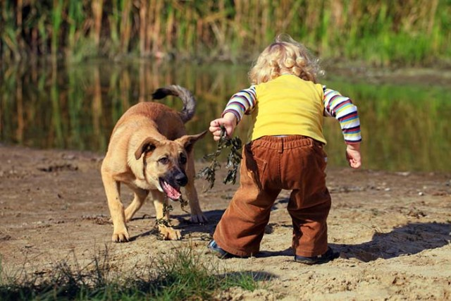 Kids under age 4 are most commonly killed by dogs