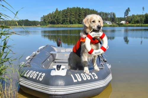 Know the Dog's Swimming Level