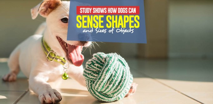 New Study Shows How Dogs Can Sense Shapes and Sizes of Objects