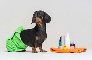 New Study - These Very Common Toxins Are Killing Our Indoor Dogs