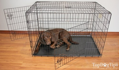 Feed Your Dog Inside the Crate