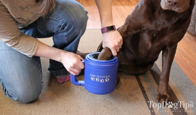 How to Clean Dog Paws After a Walk