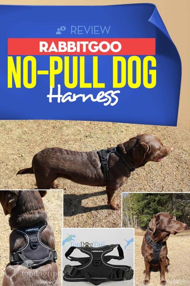 Rabbitgoo No-Pull Dog Harness Review