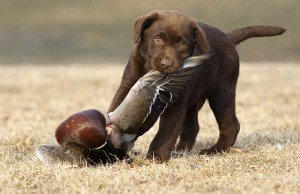 Scientists Reveal Hunting Dogs May Be Agents Of A Life-Threatening Disease