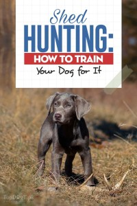 Shed Hunting Dog Training - How to Train Your Pooch to Find Antlers
