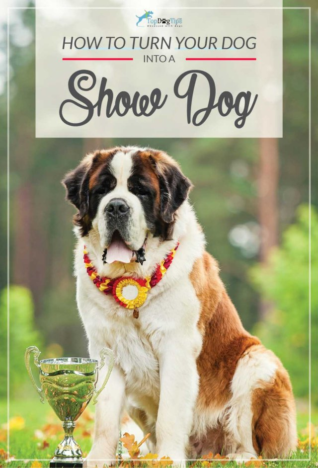Tips on How to Turn Your Dog Into a Show Dog