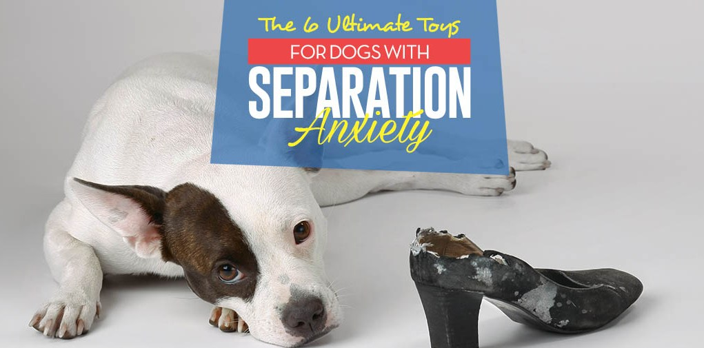 Top 6 Best Toys for Dogs With Separation Anxiety