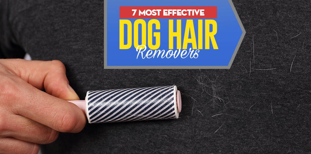 Top 7 Best Dog Hair Remover Tool