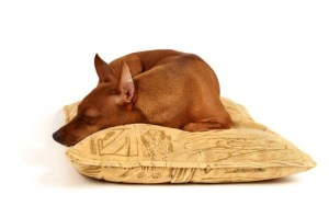 What Are the Best Dog Pillows and Dog Pillow Bed