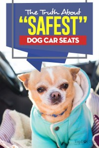 """What Is The Truth About the """"Safest"""" Dog Car Seat Choices"""