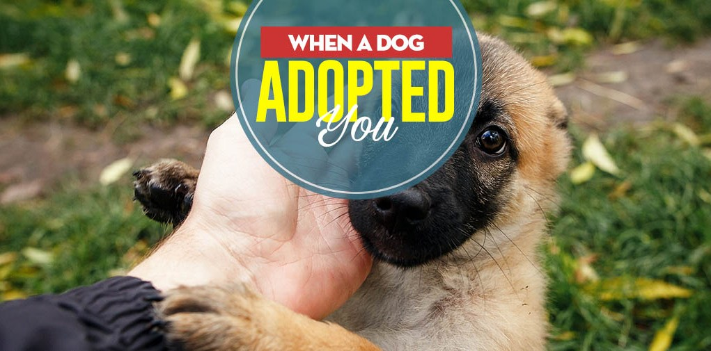 When a Dog Adopted YOU - What to Do