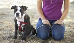 The best dog training leash