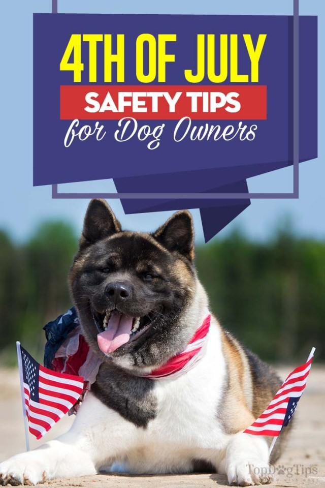 4th of July Safety for Dogs - How to Keep Your Pet Safe