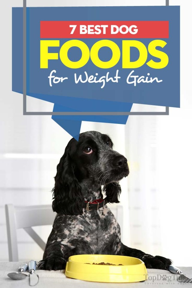 7 Top Rated Dog Foods for Weight Gain