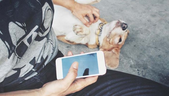 Apps for Taking Care of Your Dog's Health