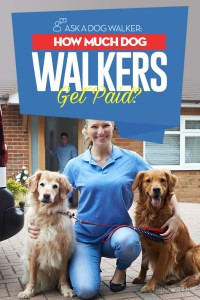Ask a Dog Walker - How Much Do Dog Walkers Get Paid