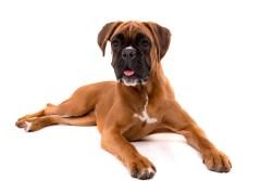 Escape Artist Dog Breeds