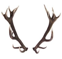 Hunting for these deer antlers