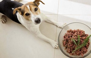 Study Says Commercial Raw Meat Foods Are Dangerous for Dogs and Humans
