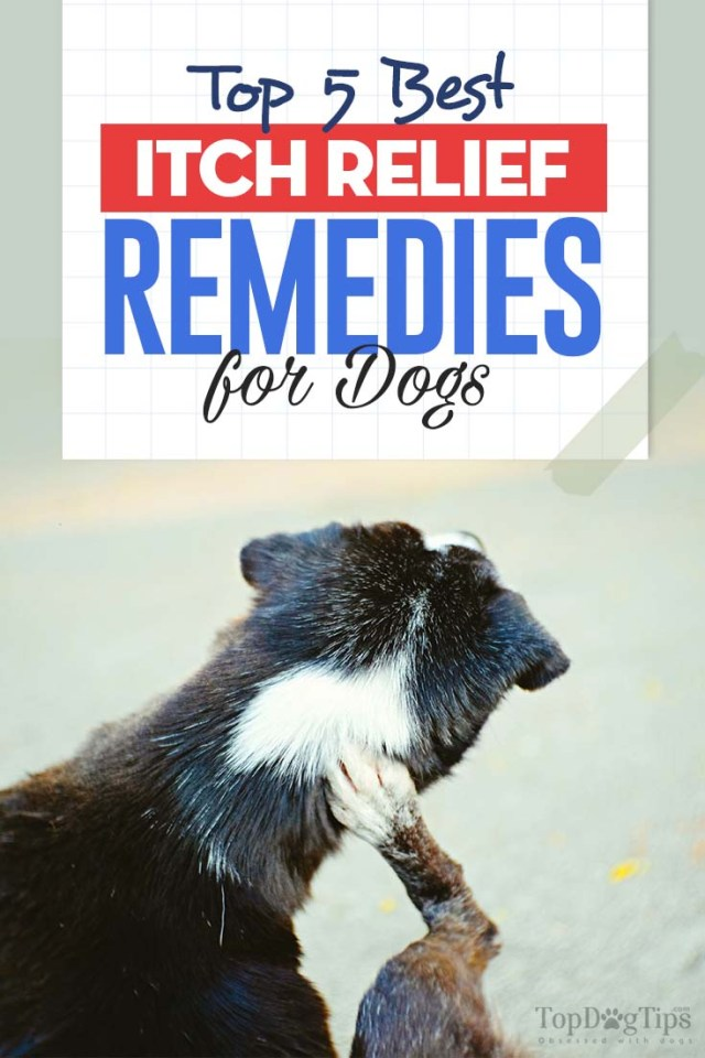 The 5 Best Itch Relief for Dogs Treatments