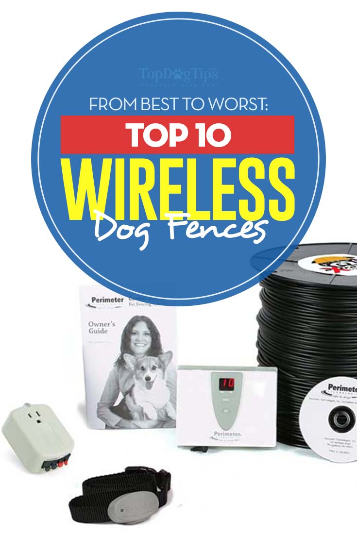 The Best Wireless Dog Fence Choices in 2018