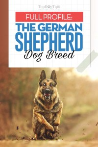 The German Shepherd Dog Breed Profile