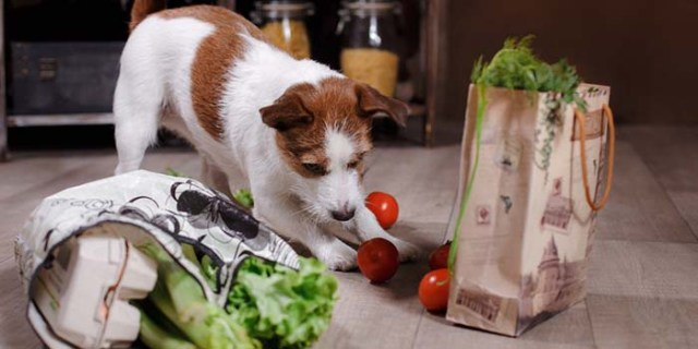 The best homemade dog food delivery services