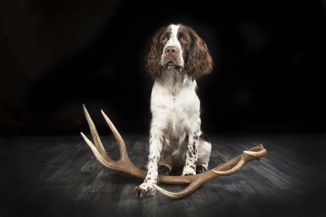 The best shed hunting dogs